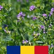 Seminte lucerna romaneasca Madalina (10 kg), soi autohton Fundulea, 4 Agro