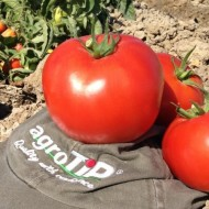 Seminte rosii Pandora F1 (500 seminte), determinate, agroTIP
