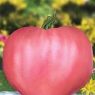 Seminte tomate Rozov Dar (Dar Roz), 1000 seminte, tip Inima de Bivol Gigant, Florian