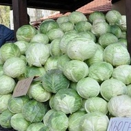 Seminte varza KYOSE (5 gr), seminte varza soi de toamna, Florian