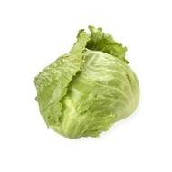 Silvinas - 1000 sem - Seminte drajate de salata tip Iceberg cu frunze de un verde deschis foarte fine ce formeaza o capatana de 0.8-1 kg gust placut frunze crocante foarte rezistente de la Rijk Zwaan