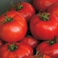 Vernal F1 - 500 sem - Seminte de rosii pentru culturile cu ciclu prelungit ajungand la o greutate de 240-260 de grame de culoare atractiva ferme si uniforme de la Enza Zaden