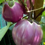 Vinete Violetta di Firenze (200 seminte), vinete pulpa alba, carnoasa, gustoasa, Agrosem