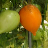 Orange Pepper (30 seminte) rosii portocalii tip ardei, soi rezistent, gustoase si dulci, UkrainaUkraina