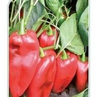 Ardei Capia Minunea Palanacko (Palanacko Cudo) - 50 gr - seminte ardei capia fructe foarte mari