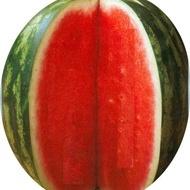 AU PRODUCER (500 gr) Seminte Pepeni Verzi tip Crimson Sweet Au Poducer de la Hollar Seeds Colorado USA