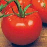 Bilbo F1 - 1000 sem - Seminte de rosii crestere determinata cu fructe rotunde de culoare rosu stralucitor ferme si uniforme avand o greutate medie de 200-230 grame/fruct de la Esasem