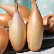 Ceapa Tosca (300 seminte), ceapa alba alungita, gustoasa, Agrosem