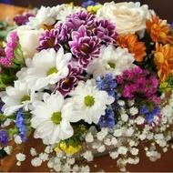 Cortaderia Mix (de Lux)  - Seminte flori de la Florian