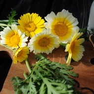 Crizantema Comestibila - 1 gr - Seminte Crizantema Comestibila origine Olanda de la Florian
