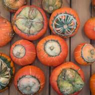 Dovleac decorativ Turban (2,5 g), seminte Tartacute dovleac decorativ in forma de turban si in diferite combinatii de culori, Kertimag