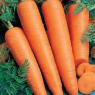 Flakkee (5 gr) seminte morcov cu radacini usor conice, lungime de 22-24 , Agrosem
