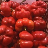 Gogomax F1 (500 seminte), seminte ardei gogosar timpurietate medie, Seminis