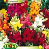 Gura Leului - Seminte Flori Gura Leului de la Florian