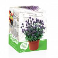 Lavanda - Kit plante aromatice