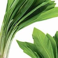 Leurda (100 seminte) de leurda, denumita si usturoi salbatic, cu gust si aroma de usturoi, Florian