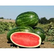 Mellina F1 - 1000 sem - Seminte de pepene verde miezul este rosu aprins dulce si crocant de la Clause
