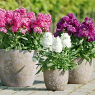Mixandre mix (0.2 grame) seminte de flori parfumate mixtura, Agrosem