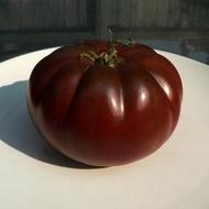 Negre de Crimeea (Black Krim) – 0.5 gr - Seminte Tomate Negre cu Crestere Nedeterminata Black Krim Negre de Crimeea Extratimpurii de la Opal