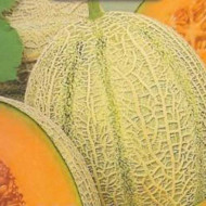 Pepene galben Retato degli Ortolani (1 kg), seminte de pepene galben soi productiv, semitimpuriu, Agrosem