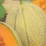 Pepene galben Retato degli Ortolani (50 seminte), pepene galben soi productiv, semitimpuriu, Agrosem