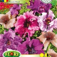 Petunie Pestrita MIX - Seminte Flori Petunie Pestrita de la Florian