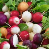 Ridichi de luna mix (600 seminte), ridichi soiuri productive, diferite culori, Agrosem