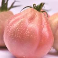 Rosamunda F1 seminte rosii tip Inima de Albenga Roz (100 seminte), ISI Sementi