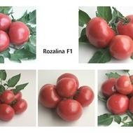 ROZALINA ROSSA F1 (1000 seminte) de Rosii semitimpurii bulgaresti, Geosem
