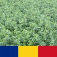 Samanta lucerna romaneasca Sandra (10 kg), soi autohton Fundulea, 4 Agro