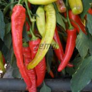 SEMAROH seminte ardei tip corn (1000 sem) ardei tip corn, culoare din verde deschis in rosu, Semo Cehia