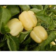 Seminte ardei gras Oida F1 ( 250 seminte), Clause