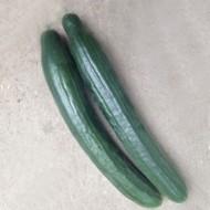 Seminte castraveti Columna F1 (100 seminte), castravete lung, Hektar