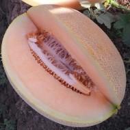 Seminte pepene galben Lilian F1 (1000 seminte), tip Ananas, agroTIP