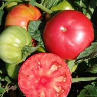 Seminte rosii Angelina F1 (Dzhinka) 50 de seminte de rosii roz extratimpurii de la Superior Serbia