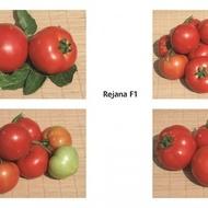Seminte tomate Reyana F1 (1000 seminte), crestere nedeterminata, semitimpurii, Geosem Bulgaria