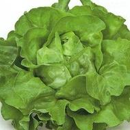 Sprinter - 5 grame - Seminte de salata verde de capatana maturitate la 45-50 zile primavara vara toamna pentru camp de la Rijk Zwaan