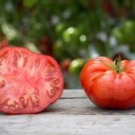 Uriase Sasesti (50 seminte) rosii gigant, soi sasesc de vara, carnoase si zemoase, Germania