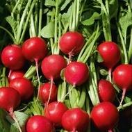 Scarlet Champion - Reggae - 50 grame - Seminte de ridichi de luna cu radacina rotunda usor aplatizata de culoare rosu aprins ce prezinta toleranta la crapare si dospire de la Bejo