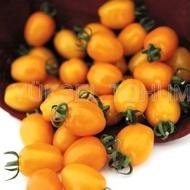 Chick F1 (142-550) - 100 sem - Seminte de tomate nedeterminate tip cocktail tomato de culoare portocalie si o greutate cuprinsa intre 30-35 g/ fruct de la Yuksel