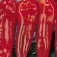 Ardei lung Corno di Toro Rosso (1 kg), seminte de ardei capia foarte gustos, Agrosem