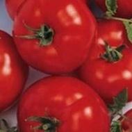 Berberana F1 - 500 sem - Seminte de rosii nedeterminate cu fructe uniforme rotund-aplatizate ferme si cu o greutate medie de 250 de grame ce se preteaza cultivarii in spatii protejate de la Enza Zaden