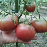 Cherokee Purple (60 seminte) rosii gigant, negru purpuriu, soi foarte vechi, USA