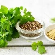 Coriandru - Seminte Plante Medicinale Coriandru de la Florian