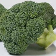 Coronado F1 - 1000 sem - Seminte de broccoli ce leaga inflorescente compacte dense frumos buchetate de culoare verde inchis de la Bejo