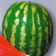 Crimson Sweet – 500 gr – Seminte Pepene Verde Hollar Seeds