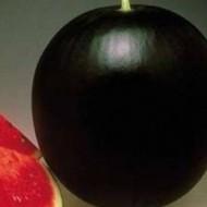 CRX 10112 F1 - 500 sem - Seminte de pepene verde cu fructe de culoare verde inchis rotunde uniforme si putine seminte avand un ciclu lung de recoltare si buna acoperire foliara a fructului de la Cora Seeds