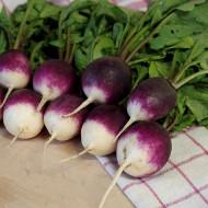 Diana (3 gr) seminte ridichi violet atractiv cu capete albe, fructe mari si rotunde usro iuti, Florian