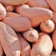 Dovleac Pink Banana Jumbo (4.000 seminte), seminte dovleac de copt soi rar, forma de banana, culoare roz, foarte dulce, Agrosem