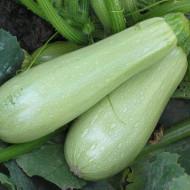 Dovlecei deGorna Oreahovita(90 seminte) de dovlecel, culoare verde deschis laptos, soi extratimpuriu, greutate fruct 250 - 300 gr, productivitate excelenta, IZK Bulgaria